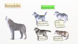 Der Wolf - Stammvater des Hundes