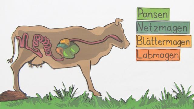 Alles über Rinder