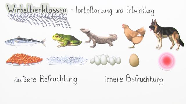 Fortpflanzung und Entwicklung der Wirbeltiere