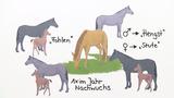 Das Pferd - ein Nutztier im Wandel