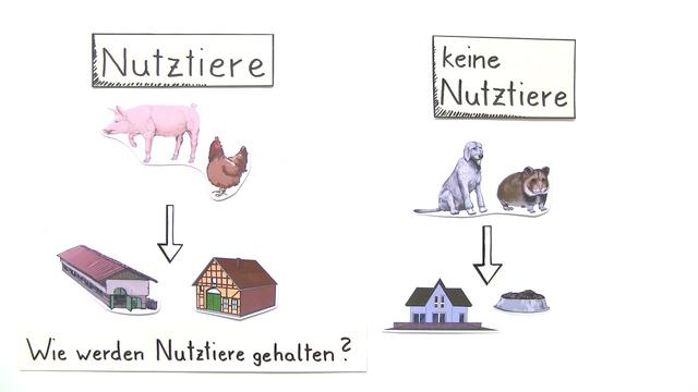Nutztierhaltung – Einfach erklärt (inkl. Übungen)