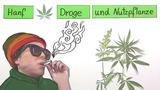 Hanf – Droge und Nutzpflanze