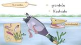 Vögel, die fliegen, schwimmen und tauchen