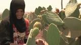 Marokko: Flüssiges Gold aus Kakteen