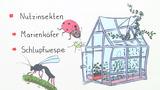 Bedeutung von Insekten
