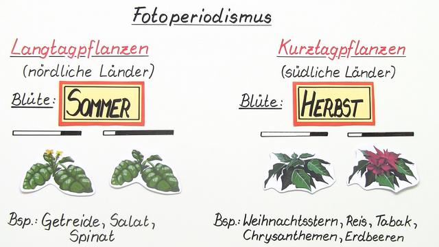 Licht als abiotischer Faktor – Anpassung der Pflanzen (Basiswissen)