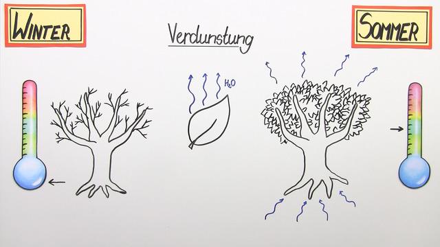 abiotischer Faktor Temperatur – Einfluss auf Pflanzen