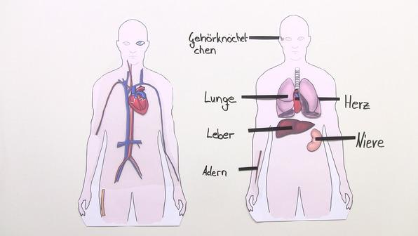 Transplantation und Transfusion