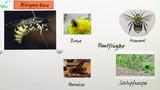 Die Wespe – Bau und Lebensweise