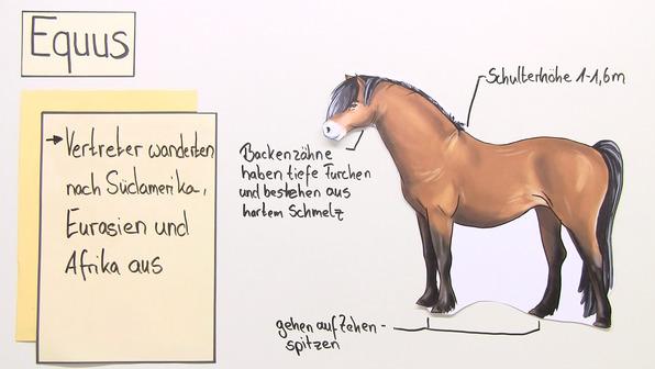 Stammbaum der Pferde