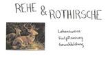 Reh und Rothirsch