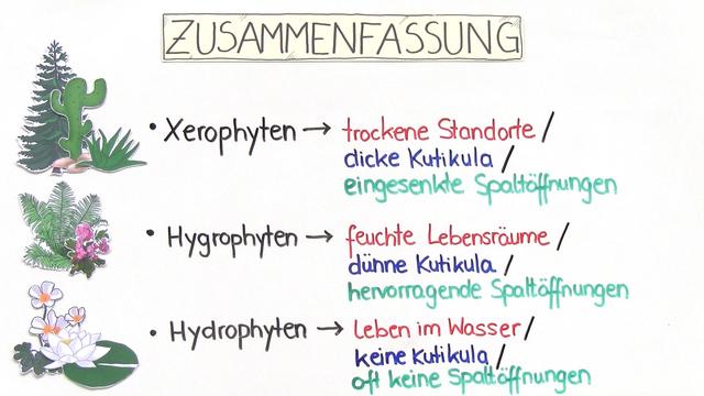 abiotischer Faktor Wasser – Einfluss auf Pflanzen (Vertiefungswissen)