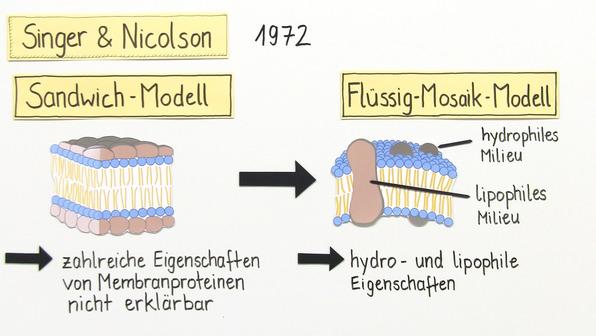 Biomembran – historische und aktuelle Modellvostellungen