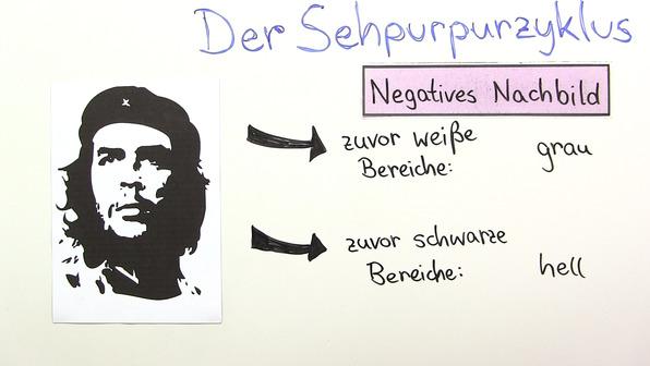 Der Sehpurpurzyklus – Entstehung eines negativen Nachbildes