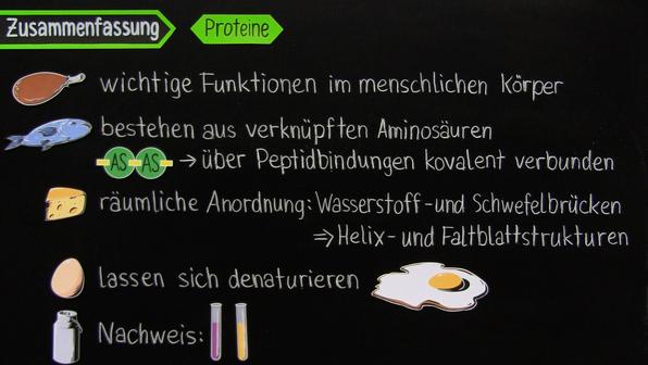 Proteine – Einführung