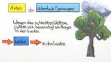 Adverbiale Ergänzungen – Überblick