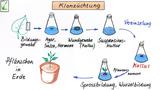 Pflanzenzüchtung