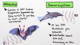 Sinneswahrnehmung bei Tieren