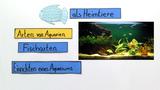 Aquarium – Fische als Heimtiere
