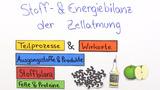 Zellatmung – Überblick des Prozesses mit Stoff- und Energiebilanz