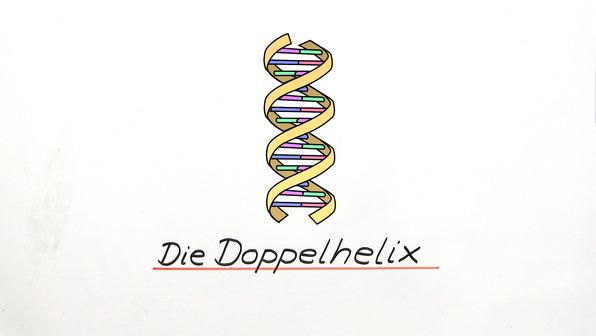 Aufbau der DNA – Struktur und Bindungen