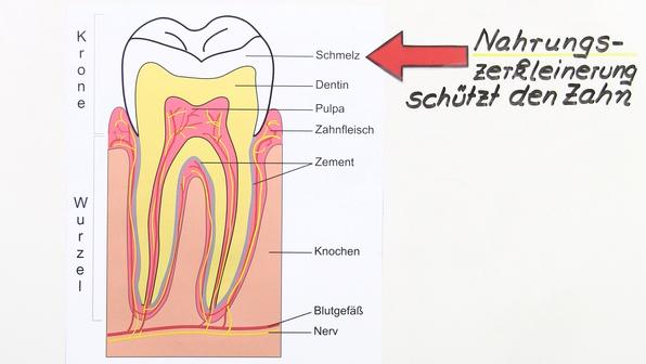Chemie der Zähne