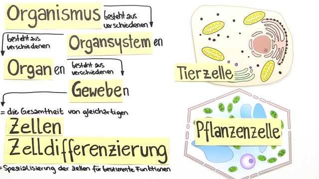Aufbau der Zelle – Funktionen und Gemeinsamkeiten