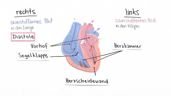 Herztätigkeit – Methoden der Überprüfung