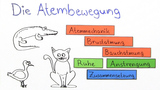 Die Atembewegung (Basiswissen)