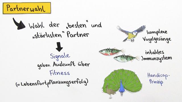 Verhaltensbiologie Tiere