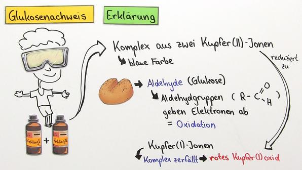 Nachweis von Glukose und Cellulose