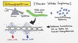 Fotosynthese –  Experimentelle Erforschung der Fotosynthesereaktion