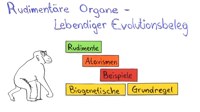 rudimentre organe lebendiger evolutionsbeleg biologie online lernen - Koevolution Beispiele