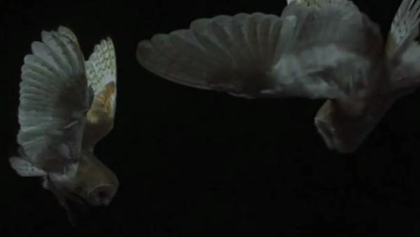 Bionik – Vögel und Insekten als technische Vorbilder