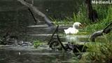 Grundwasser gestaltet Ökosysteme