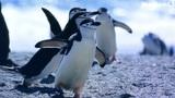 Der Lebensraum der Pinguine