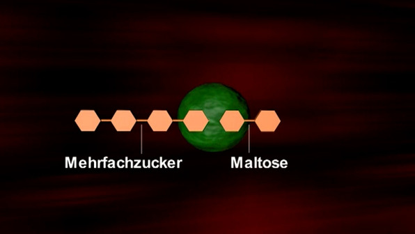 Beeinflussung der Enzymfunktion