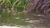 Die Vögel am Fluss
