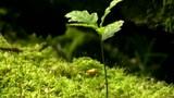 Der Wald als Ökosystem