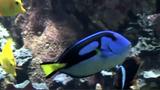Fische – Atmung und Fortbewegung