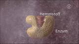 Enzyme – Hemmung