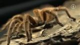 Fortbewegung an Land: Wirbellose Tiere