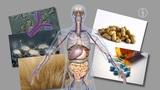 Immunsystem und Immunschwäche: Allergien
