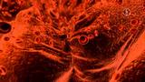 Die Lunge des Menschen: Das Prinzip der Oberflächenvergrößerung