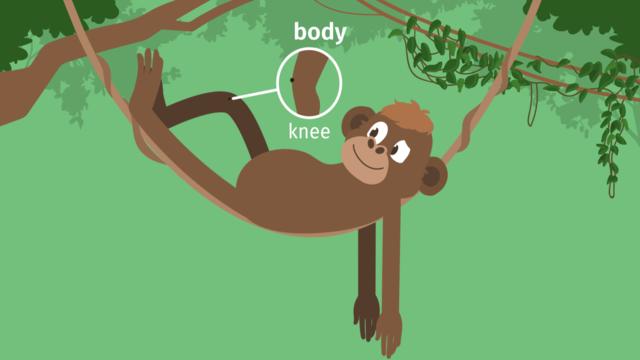 Body – Vokabeln zum Körper