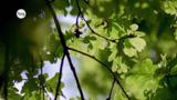 Wie kommt das Wasser aus den Wurzeln in die Blätter?