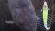 Hörsinn in der Tierwelt
