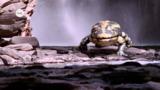 Wie haben sich Amphibien entwickelt?