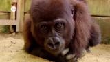 Rote Liste gefährdeter Arten