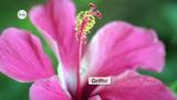Aufbau der Pflanzen: Die Blüte